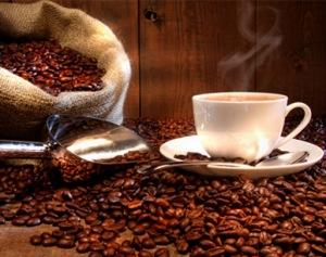 Cofee_Cafegiicupedigree