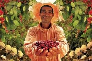 philippine_coffee_farmer